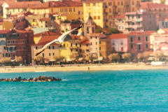 Seagull flying and Italian town in the background. This seagull is enjoying life in Lerici, a famous town in Italy`s Cinque Terre Royalty Free Stock Photos