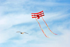 Seagull and flying kite Royalty Free Stock Images