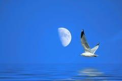 Seagull flying near the Moon Stock Photos