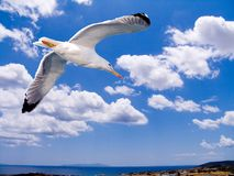 A seagull flying over the Aegean. With clouds and a bleu sky in the background stock images