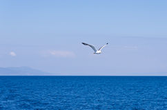 Seagull flying over Aegean sea with greek islands in background stock photo
