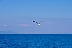 Seagull flying over Aegean sea with greek islands in background Royalty Free Stock Images
