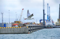 Seagull Flying Over. Seagull flying  in the bay Royalty Free Stock Photo