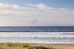 Seagull flying through the sky royalty free stock photos