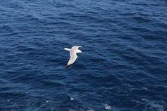 Seagull flying over blue ocean
