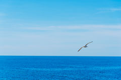 Seagull flying over the blue sea in Sardinia. Italy Royalty Free Stock Photo