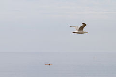 Seagull flying over a boat. Bird in flight over head by the sea Royalty Free Stock Photography