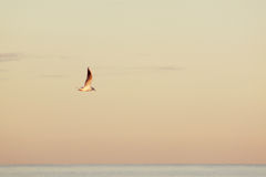 Seagull flying over the calm sea, bright painted sky Royalty Free Stock Photos