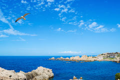 Seagull flying over Costa Paradiso Royalty Free Stock Images
