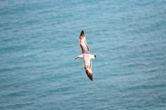 Seagull flying over the Mediterranean sea. Royalty Free Stock Photos