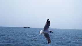 Seagull flying over ocean in the blue sky stock images