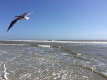 Seagull Flying Over the Ocean. At Hilton Head Island Stock Photo