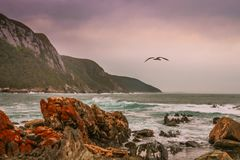Seagull flying over ocean with rocky beach. On a cloudy day Royalty Free Stock Images