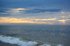 Seagull Flying Over Ocean at Sunrise Royalty Free Stock Images