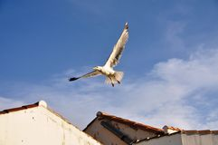 Seagull flying over rooftops Royalty Free Stock Photography