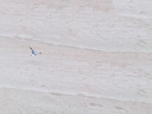 Seagull flying over sand Royalty Free Stock Image