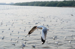 Seagull flying over the sea. And other seagull Royalty Free Stock Images