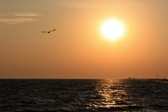 Seagull flying over the sea on the background of sunset.  Stock Images