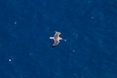 Seagull flying over the sea Royalty Free Stock Image