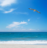 Seagull flying over the sea Stock Image