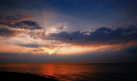 Seagull flying over the sea at sunrise. Stock Photo