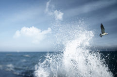 Seagull. A seagull flying over the sea surface Royalty Free Stock Images