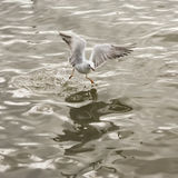 Seagull flying over sea Stock Photos