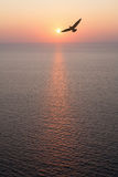 Seagull flying over sunset ocean Royalty Free Stock Photography