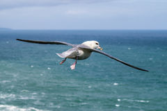Free Seagull Flying Over The North Sea Royalty Free Stock Photos - 86844618