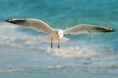 Free Seagull Flying Over The Sea Royalty Free Stock Photo - 60963075