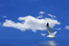 Seagull flying over water with clouds Royalty Free Stock Image