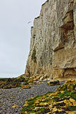 Seagull flying over White cliffs of Dover at St Margarets at Cliffe in Great Britain Royalty Free Stock Images