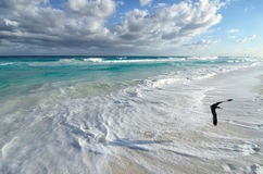 Seagull flying over white sand beach and turquoise sea water Stock Image