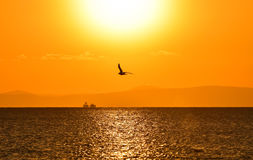 Seagull flying on the sea at sunset. Royalty Free Stock Photo