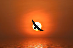 Seagull flying. Shadow of an seagull flying to the sun by red sunset over the ocean Royalty Free Stock Photography