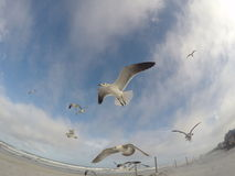 Seagull flying on the sky royalty free stock photography