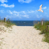Seagull flying in sky at beach Stock Image