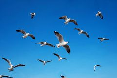 The seagull is flying in the sky with day light