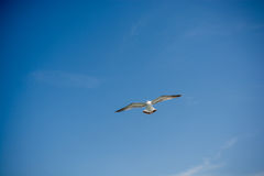 Seagull flying in sky over the sea waters Royalty Free Stock Photography