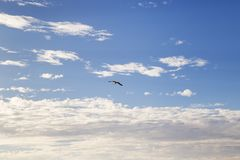 Seagull flying through the sky. Seagull flying in a cloudy blue sky Stock Images