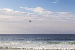 Seagull flying through the sky. Seagull flying to fish over a blue sea on the coast Stock Photo
