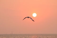 Seagull flying in the sky with wide open wings Royalty Free Stock Images