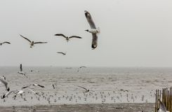 Seagull are flying and standing. With sea and sky royalty free stock photography