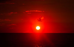 Seagull flying at sunrise on the background of sea and sun Royalty Free Stock Photography