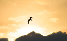 Seagull flying at sunset sky, silhouette. Sun between clouds a seagull flying. Royalty Free Stock Images