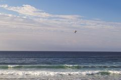 Seagull flying through the sky. Seagull flying to fish over a blue sea on the coast Royalty Free Stock Photography