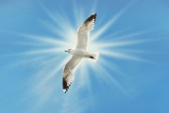 Seagull flying under dramatic blue skies Stock Photo