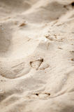Seagull foot prints on the sand closeup Royalty Free Stock Images