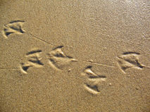 Seagull Footprints stock images