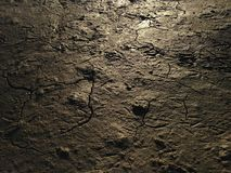 Seagull Footprints in Cracked Mud on Bottom of Receded River. Stock Photos